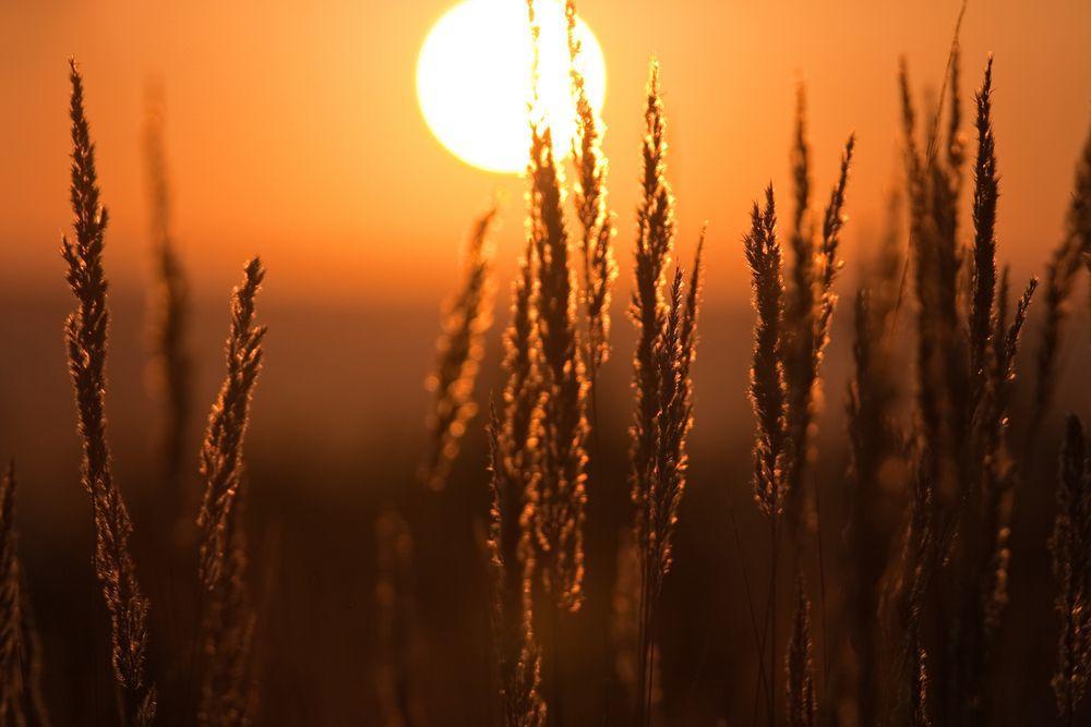 Пример съемки цветов на закате