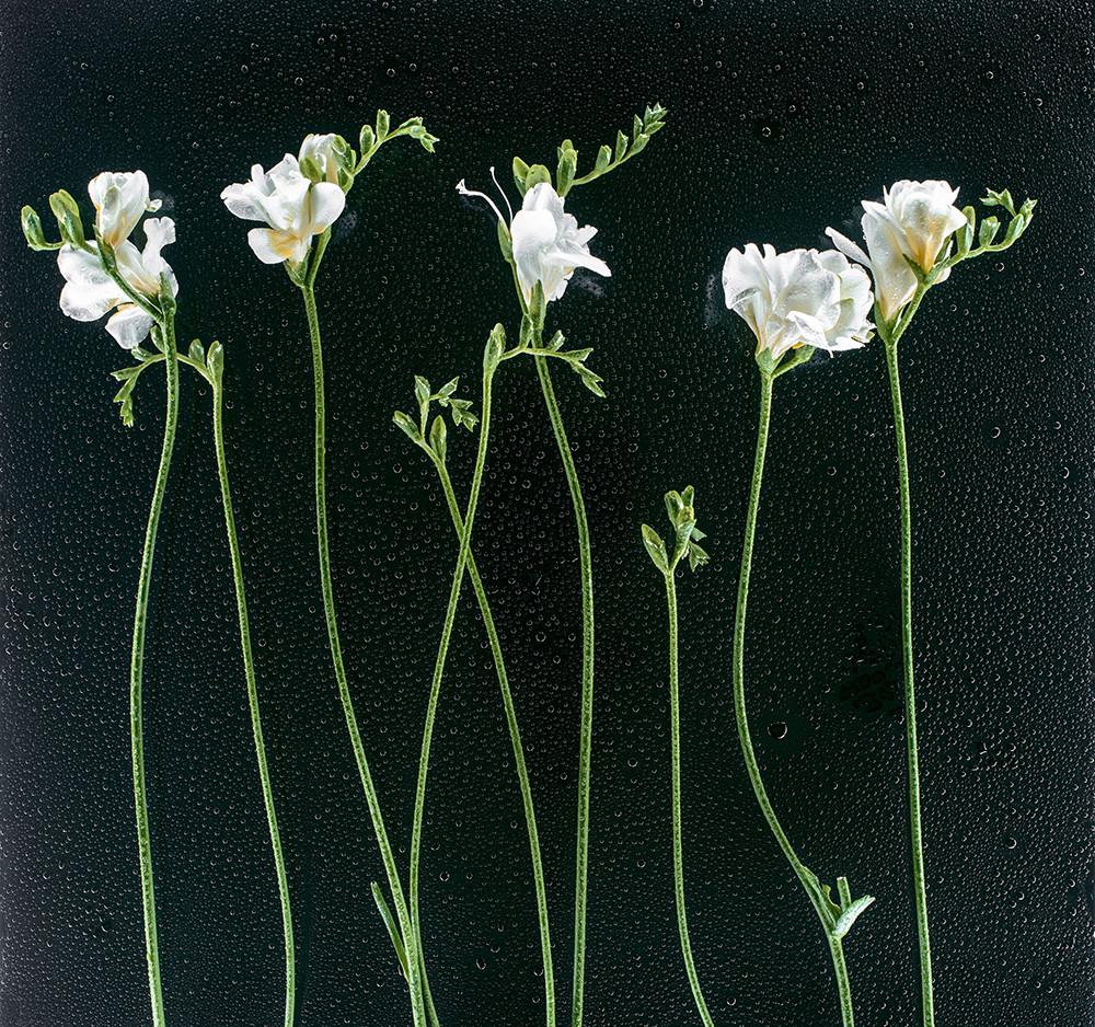 Пример фото цветов на черном фоне