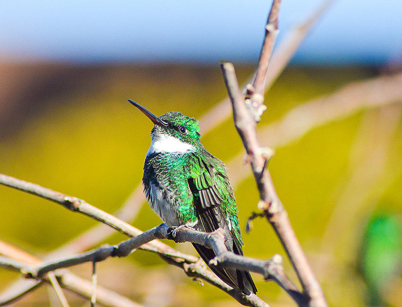 Пример съемки птиц