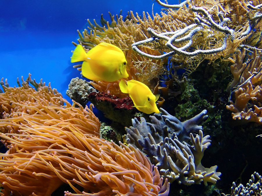 Урок и пример съемки под водой